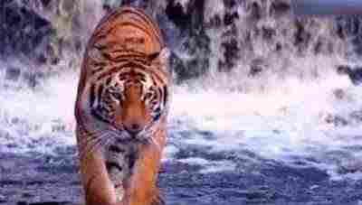 کلیپ قوی ترین جانداران روی زمین - هیولای های قدرتمند کره زمین - ویدیو کلیپ بسیار زیبا از قویترین حیوانات جهان - سلطان های حیات وحش - برترین ویدیو کلیپ در مورد حیوانات - زیبایی های حیات وحش
