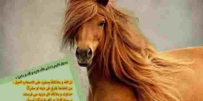 سوارکاری (Horseback riding)و فواید طبی آن -جایگاه اسب در سبک زندگی اسلامی