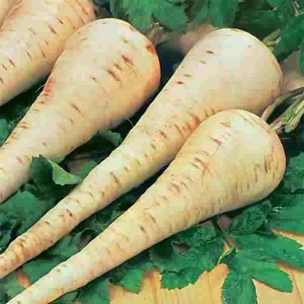 آموزش درست کردن مربای زردک -مربای هویج ایرانی(Persian Carrot)