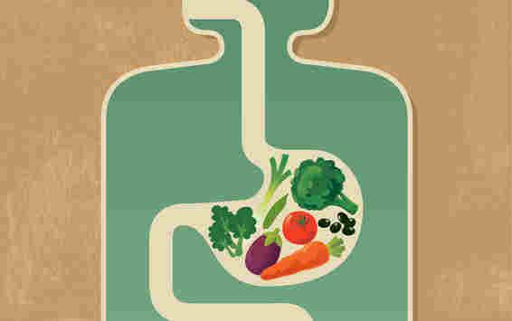 غذا در بدن چگونه هضم می شود؟