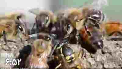 ویدئو کلیپ ۱۰ جانور مرگ آفرین در طبیعت - جانوران مرگبار