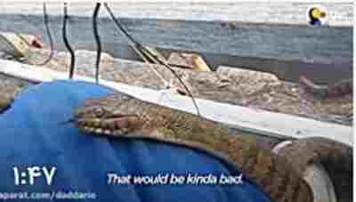 ویدئو کلیپ دوستی و غذا دادن یک مرد به مار - غذا دادن به مار