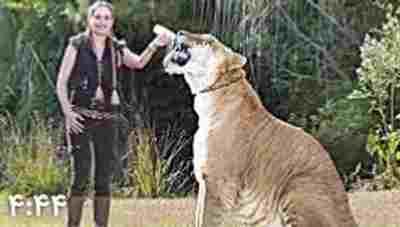 ویدیو کلیپ بزرگترین حیوانات در نوع خود - بزرگترین حیوانات جهان
