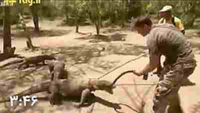 ویدئو کلیپ قدرت فشار آرواره های مرگبار اژدهای کومودو چقدر است