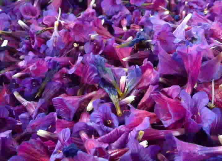 خواص دارويي گل گاو زبان