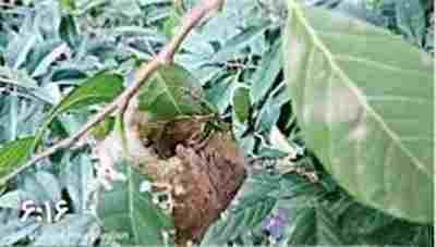 ویدئو کلیپ فیلم زیبای پرنده خیاط (مرغ دوزنده)