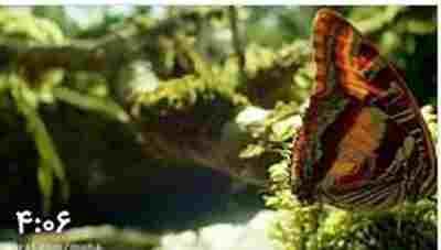 ویدئو کلیپ جنگل پروانه ها - کوههای موزانبیک ، جنگل گُگُل معروف به جنگل پروانه ها