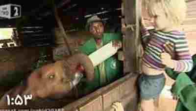 کلیپ یتیم خانه فیل ها - فیل هایی که پدر و مادر خود را به دلایل مختلف از دست داده اند+ ویدئو