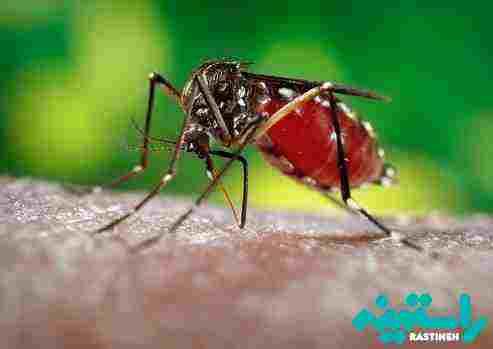 مالاریا چیست ؟ علل - علائم- تشخیص و درمان آن