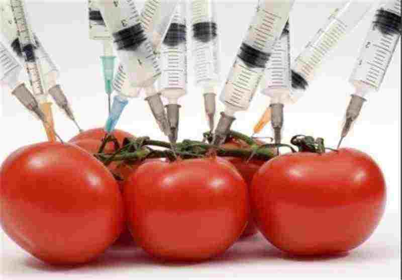 تاثیر مواد غذایی اصلاح شده ژنتیکی بر سلامت