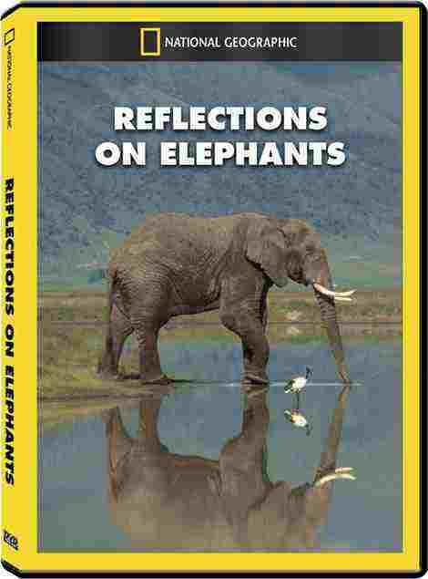 دانلود مستند فیل ها Reflections On Elephants 1994 + دوبله فارسی